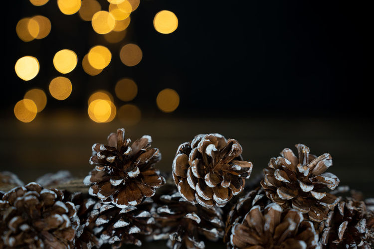 pine cones with bokeh lights on the background Close-up No People Plant Indoors  Pine Cone Focus On Foreground Selective Focus Nature Still Life Decoration Beauty In Nature Dry Christmas Celebration Freshness Bokeh Fall Backgrounds Wallpaper Lights