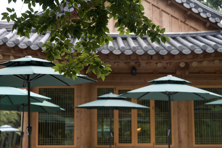 Juknokwon, the famous bamboo park in Damyang, Jeonnam, South Korea Damyang Juknokwon Architecture Bamboo Park Building Exterior Built Structure Close-up Day Nature No People Outdoors Parasol Roof