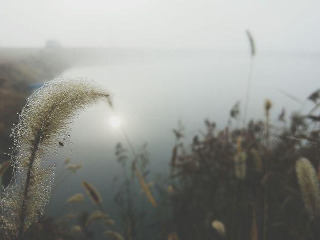 "morning dew and morning fog beside the pond ""my life through a lens"" Earlymorningfog Morning Dew Foggy Morning Dew"
