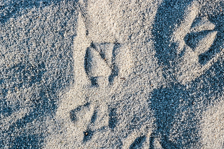 Backgrounds Full Frame Textured  Close-up Pattern Abstract No People Day Outdoors Moonlight Beach Bird Photography Bird Foot Print Animal Tracks Birds_collection Nature Seagull Beachphotography Beach Sand