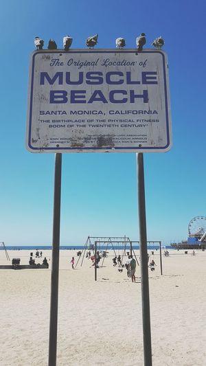 Muscle beach - CA Beach Sand People People Watching Blue Sky Muscle Beach Muscle Beach Sign Beach Sign California Venice Beach Bodybulding Outside Gym Gym Blue Text Sunny Sunlight Sky Information