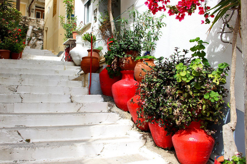Building Exterior Day Flower Greece Growth Lesbos Lesvos No People Plant Potted Plant Red Red And White Red Flower Red Flowers Side By Side Stairs The Way Forward Village Village Life Walkway White And Red White Stone