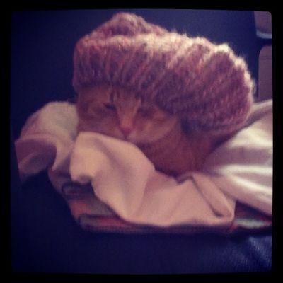 cat pictures:Žule spreman za mečavu :)