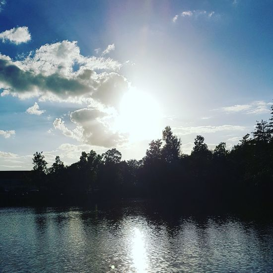 Tree Sky Water
