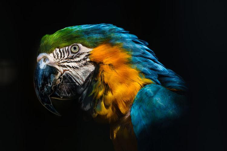 Parrot Colours Beautiful Wildlife Animals Bird Shadows & Lights Blue