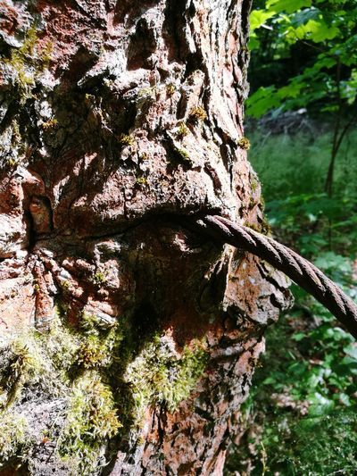 Tree Nature No People Eingewachsen Metalund Holz