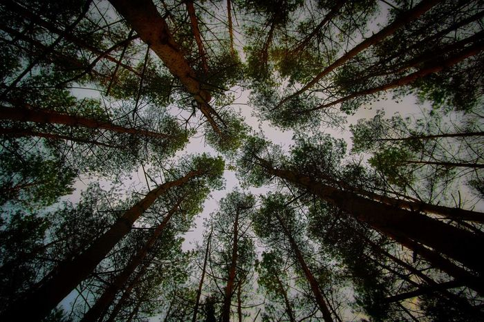 Perspective Perspectives on Nature Nature Beauty In Nature Forest Photography Treescape Winter Forest Woods Trees Silence Photo Photography Nature Photography Nature_collection Cold Temperature Germany Upside Down Up Treetop Crown Angle Art EyeEmNewHere
