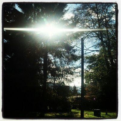 Eyeinthesky Updaily All_shots Instasun Sunrays Nature Sun Instatree Instagramming