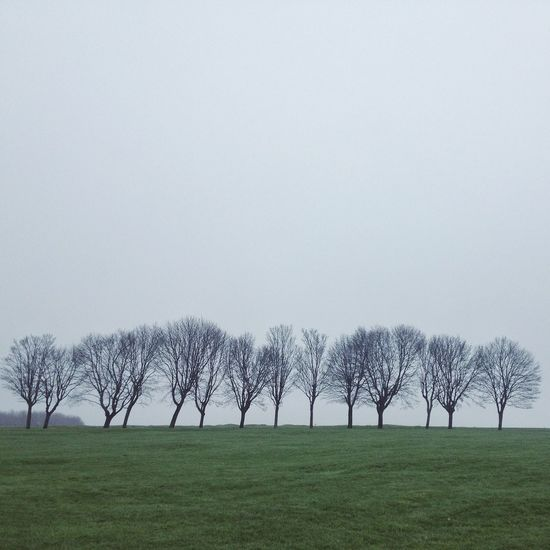 A winter without snow. Winter Season  Trees Dry Fog Grey Cold Outdoors Showcase: January Rows Of Things Landscape Cloudy Day Nature Silence Lonely Atmosphere Cold Temperature Dramatic Sky Scenics Moody Sky Shot On IPhone Landscapes With WhiteWall Lost In The Landscape