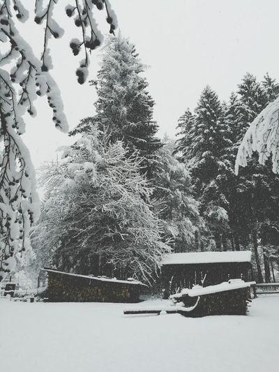 Snow ❄❄❄