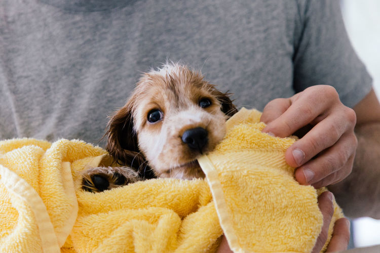 Midsection of man drying wet puppy with towel