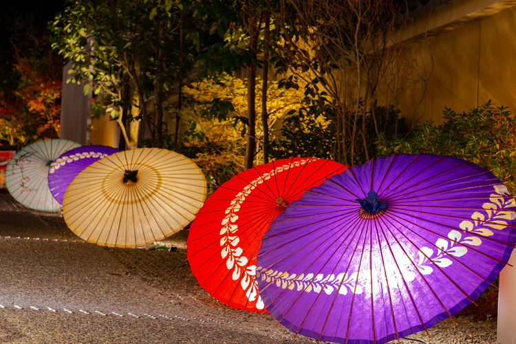 Multi colored umbrellas hanging on tree