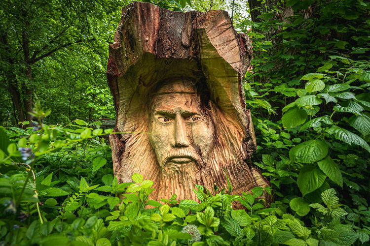 Close-up of sculpture on tree trunk in forest