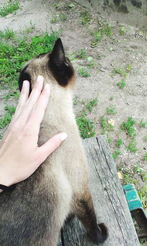 Cattie Hi! Enjoying Life