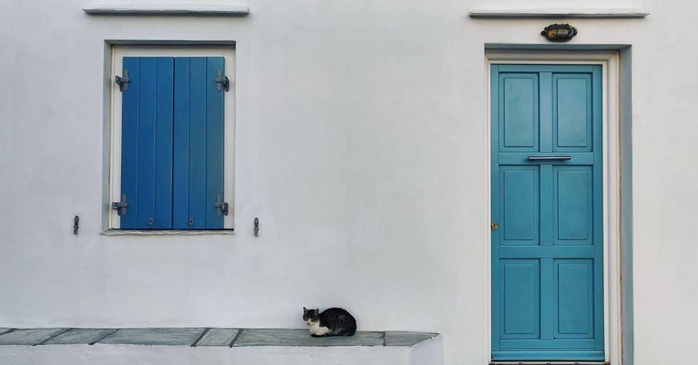 Cat sitting under window of house