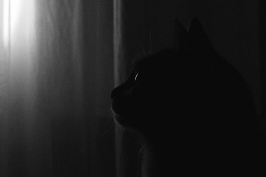 Blackandwhite Single Light Source Cat Catface Monochrom Low Light Cats Cats Of EyeEm Cat Photography Cute Cats Shades Of Grey Monochrome Monochromatic Black And White Minimalism Black And White Photography Lowlight Cat Eyes Cat Watching Monochrome Portrait HUAWEI Photo Award: After Dark