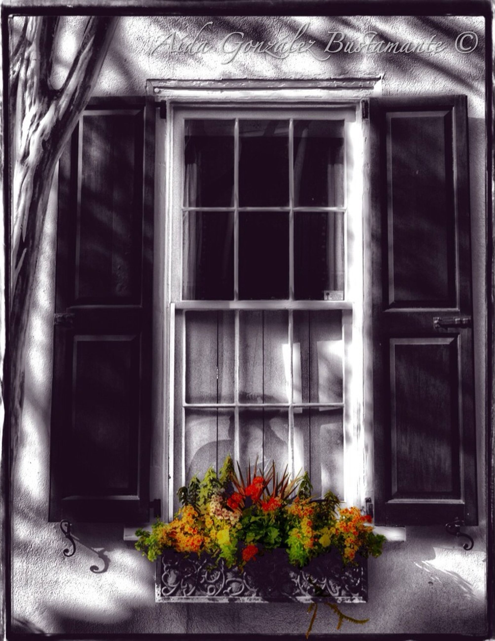 window, house, door, transfer print, built structure, closed, indoors, architecture, auto post production filter, building exterior, potted plant, wood - material, plant, window sill, glass - material, flower, open, entrance, home interior, no people
