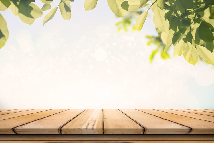 Plants over wooden table against sky