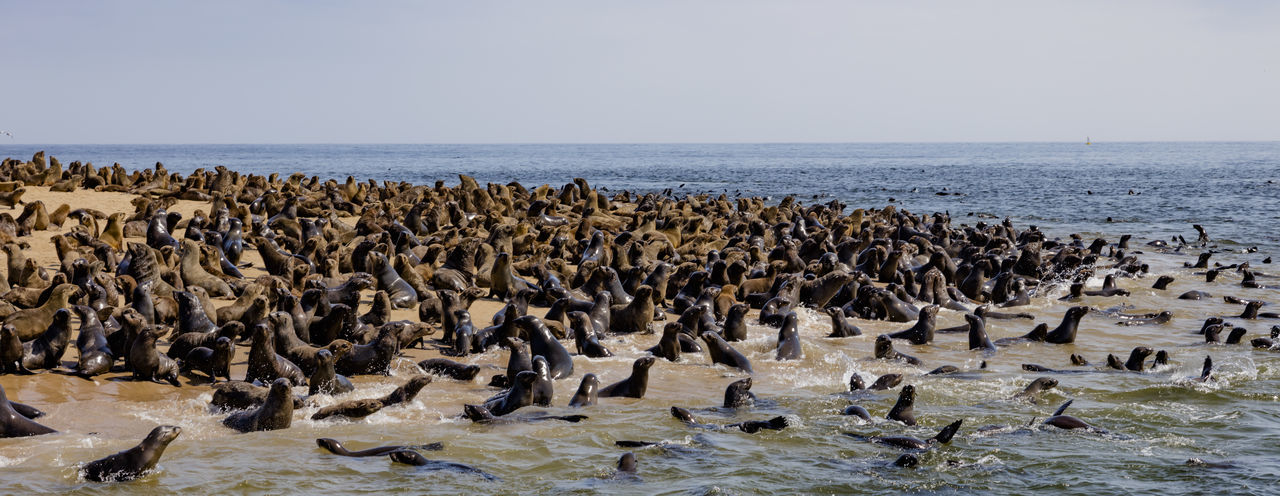 A Seal Colony