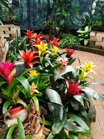 Flower Growth Plant Leaf Nature Green Color Beauty In Nature No People Day Outdoors Flower Head Fragility Close-up Freshness Blooming Tree Greenhouse Bromelias Cassa Della Farfale Italy🇮🇹 Bordano