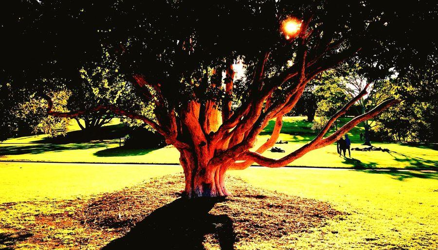 Tree Light Sunset Sun Silhouettes Park Nature Landscape Grass Shadow Green Gardens Contrast Enjoying Life Beauty Sunlight