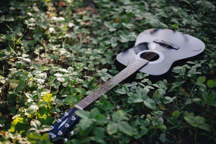 Sommergefühle Music Musical Instrument Guitar No People Musical Instrument String Plant Day Outdoors Close-up Classical Music Electric Guitar Guitars Grass Green