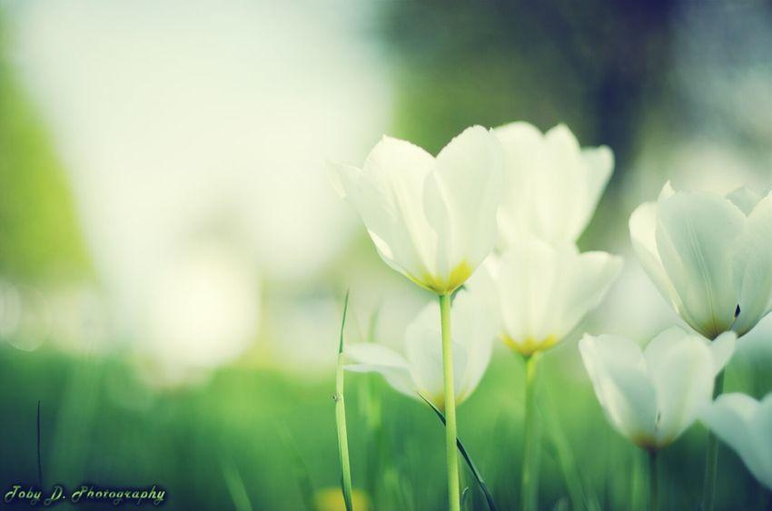 Wiese am Ceckpoint Harry Flower Blumen Boizenburg