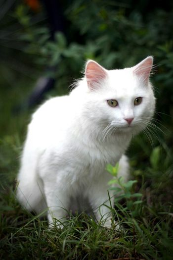 A cat I met outside one sunny day in Vaxholm. I Love Cats I Love Animals Cats Nature_collection Hanging Out Check This Out Cheese! Taking Photos Hello World Enjoying Life