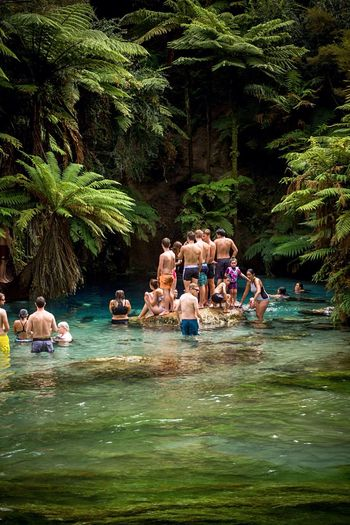 Teenagers  Swimming Swimming Hole Blue Springs near Rotorua  New Zealand Natural Spring Water River Riverbank Tourist Attraction  Summer Views New Zealand Landscape Clean And Green New Zealand Scenery Summer ☀ Kids Enjoy The New Normal Perspectives On Nature