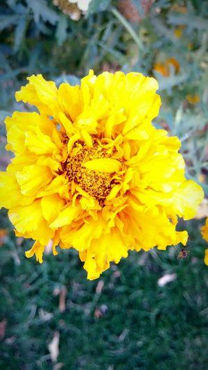 Randomshot Yellow Flower First Eyeem Photo