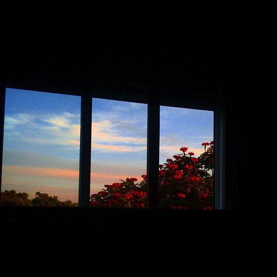 Flores na janela ... Flores Flower DaJanela Riograndedosul Igersrs Brasil Sunset Respirofotografia