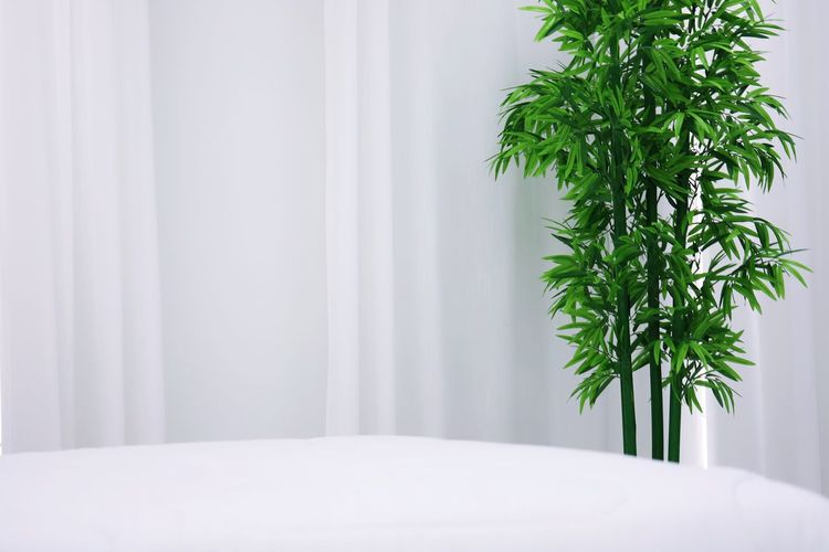 Close-up of plant on bed at home