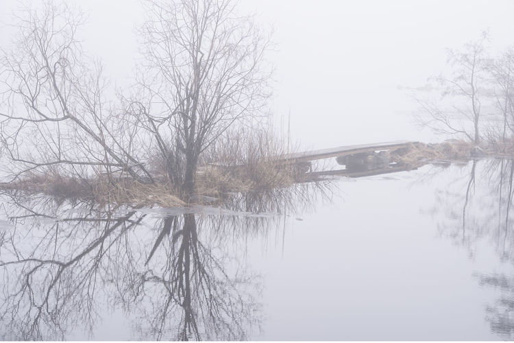 EyeEm Best Shots EyeEm Nature Lover Taking Photos Bare Tree Beauty In Nature Branch Cold Temperature Enjoying Life Lake Nature No People Outdoors Photography Plant Reflection Scenics - Nature Sky Snow Snowing Tranquil Scene Tranquility Tree Water Waterfront Winter