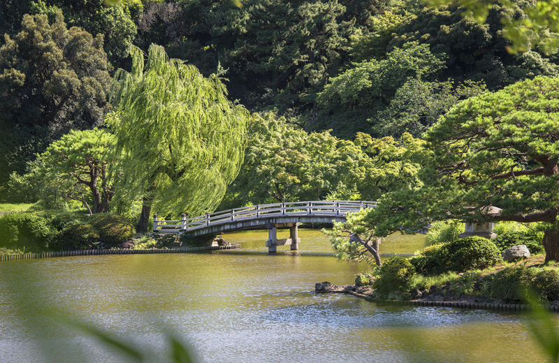 Upper pond's wooden bridge and the forests of the japanese garden of gyoen park in early summer.