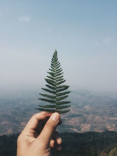 Cropped Image Of Person Holding Plant Against Mountain