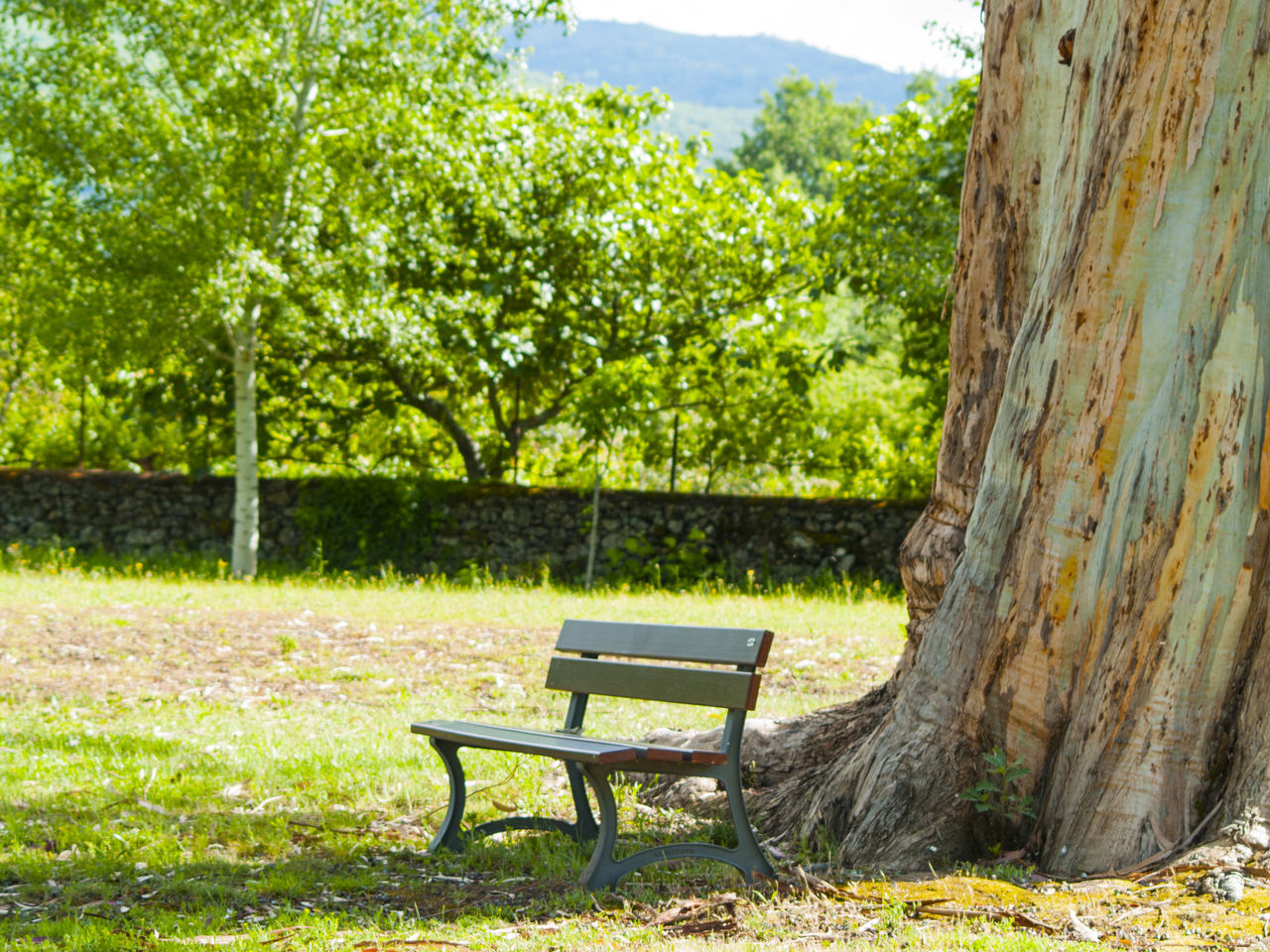 tree, day, grass, no people, chair, outdoors, nature, tree trunk, beauty in nature, sky