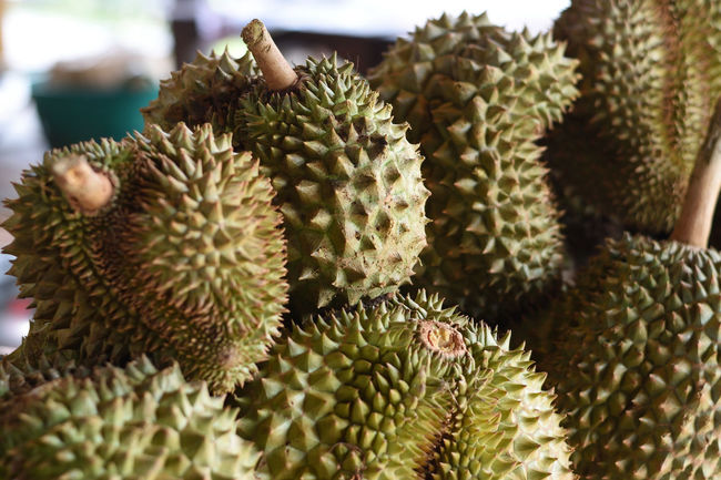 Durian Durian Fruit Durians Edible  Fruit King Of Fruit King Of Fruits Sulfur  Thorn