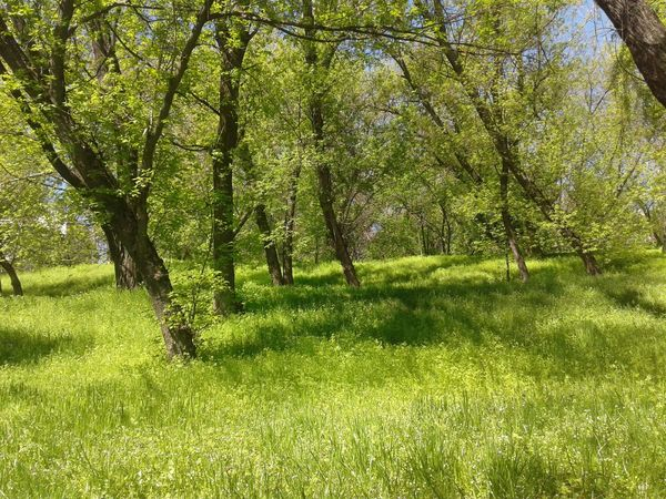 Beauty In Nature Day Grass Green Color Nature No People Tranquility Tree