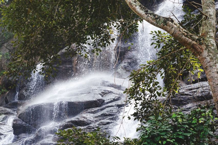 Fresh water falls Motion Water Nature Tree No People Beauty In Nature Waterfall Outdoors Day Forest Freshness Scenics