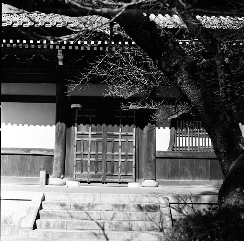 Analogue Photography Architecture Architecture_collection Black & White Film Japan Japan Photography Japanese Culture Japanese Temple Tree Analog Architectural Detail Architectural Feature Architecture_bw Blackandwhite Blackandwhite Photography Film Photography Filmcamera Filmisnotdead Hasselblad Light And Shadow Temple Temple Architecture Templephotography Window