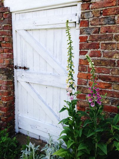 Brick Wall Outdoors Garden Gate Foxgloves Flowers Flowers,Plants & Garden Flowers, Nature And Beauty Sand-le-Mere Flower