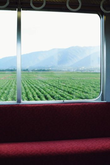 Train Transportation Pubric Transportation Window Field Green Color Faniture Bench Red Mauntain Nature Beauty Beauty In Nature Agriculture Rural Scene Field Sky Day Landscape ASIA Japan Ultimate Japan Gifu Connected By Travel Lost In The Landscape EyeEmNewHere Perspectives On Nature Rethink Things