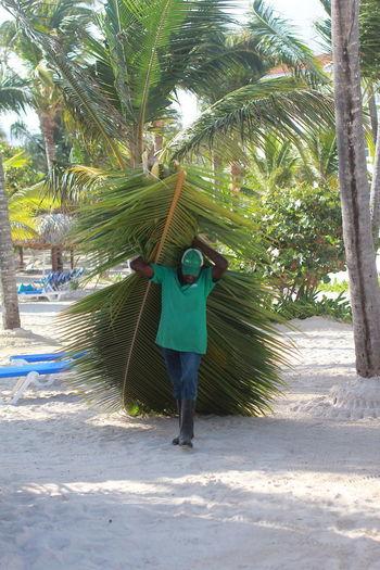 Tree Plant Palm