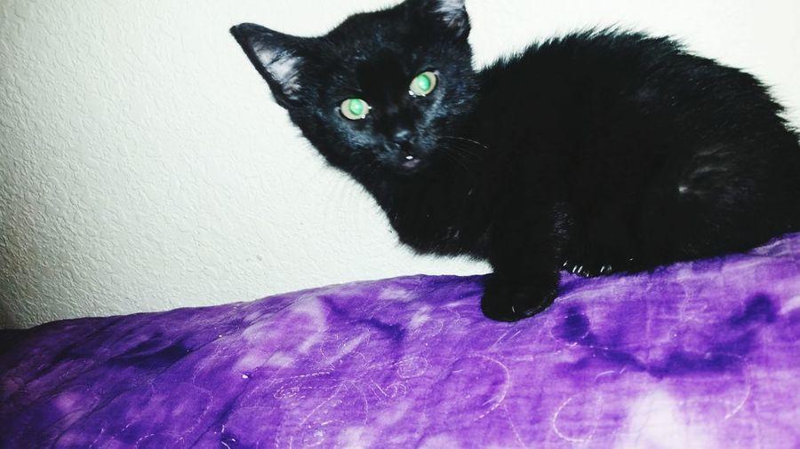 Look at my new christmas gift, lloyd 😊 Kitten Lloyd Christmas Dumbanddumberto Black Kitty Green Eyes