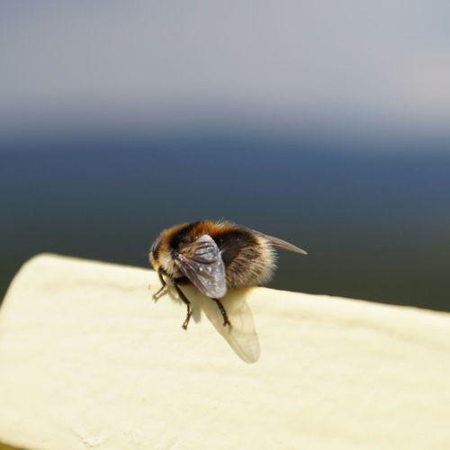 Bee 🐝 Hungary