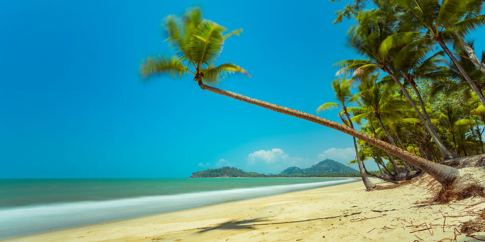Backgrounds Beach Photography Ocean View Palm Tree Tropical Paradise Fine Art Photography Beach Beachphotography Beauty In Nature Beauty In Nature Eye4photography  Day Horizon Over Water Nature Ocean Outdoors Sand Sea Palm Trees Sky Tranquil Scene Tranquility Tree Tropical Been There. Summer Exploratorium