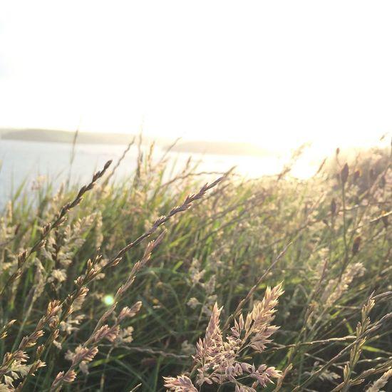 Sea Dunes Corcaigh Ireland Sunset