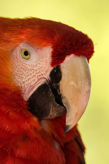 Animal Body Part Animal Eye Animal Head  Animal Themes Beak Bird Bird Of Prey Birds Close-up Day Feather  Focus On Foreground Multi Colored Natural Pattern Nature No People Outdoors Owl Parrot Parrots Peroquet Portrait Red