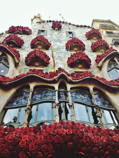 Casa Batlò in the St.Jordi's day.Barcelona.Spain Built Structure Low Angle View Architecture Outdoors Building Exterior Gaudi Lovefortravel #Travel EyeEmNewHere EyeEm Best Shots EyeEm Gallery EyeEmBestPics City Travel Destinations SPAIN Photography Barcellona Red Flower Balcony Streetphotography Travel Photography Casabatllo window Sommergefühle EyeEm Selects The Week On EyeEm Your Ticket To Europe Done That.