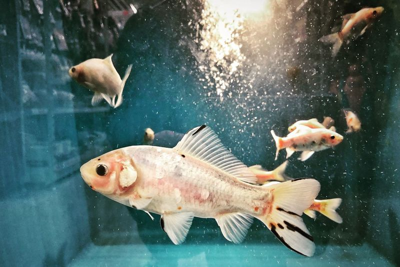 Naturephotography Photography Picoftheday Photooftheday Photographer Animal Animal Wildlife Animal Themes Water Animals In The Wild Sea Swimming Group Of Animals Transparent Nature Sea Life Glass - Material Close-up Underwater Fish School Of Fish Marine